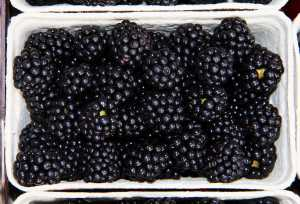 Blackberries (Luster Now Toothpaste destroys these stains)