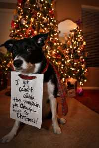 Dog shaming - Dog have the worst Xylitol side effects