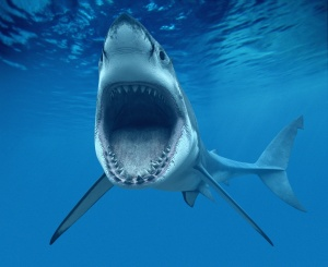 Shark teeth (Dangers of Overnight Teeth Whitening Kits)