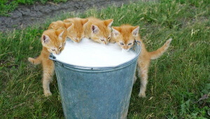 Five Thirsty Little Kittens