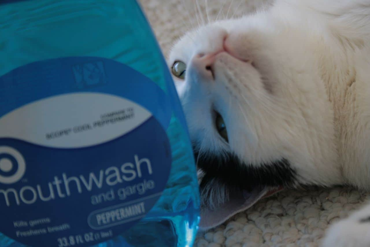 Mouthwash Cat